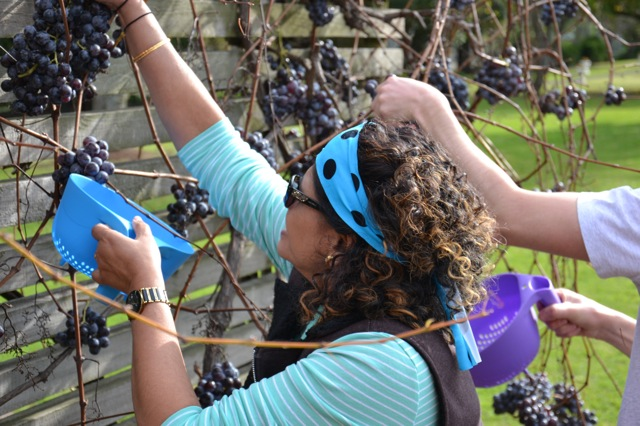 hunter valley wine country grape picking team building activities