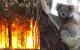 Koala-Habitat-Team-Building-Bushfire victims die